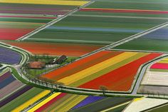 Aerial view of tulip flower fields in Amsterdam. Beautiful