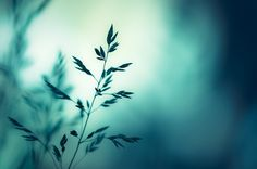 Nature Photography  turquoise aqua decor fine by CarolynCochrane,