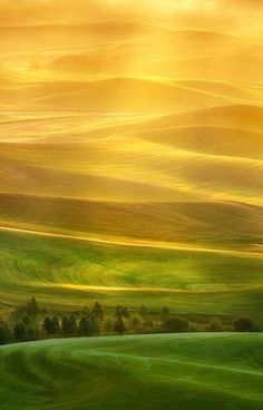 shades of gold and green