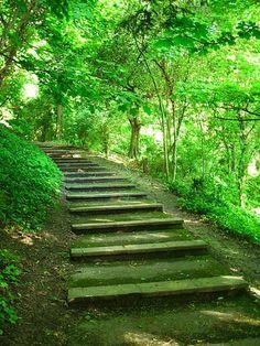 forests, stair, garden ideas, paths, pathway, nature, green, blog, walk