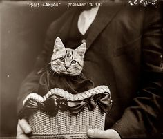 Early Aviator John Moisant's beloved pet, Mademoiselle Fifi, became the first cat to fly across the English Channel on August 23, 1910 via http://www.thehistorybluff.com (Source: maudelynn.tumblr.com )