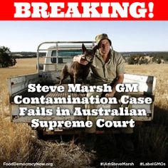 BREAKING NEWS: Western Australian farmer Steve Marsh -#IamSteveMarsh -has lost a landmark case which could have protected his organic status, after his property was contaminated by GM canola from a neighboring farm. More here: http://sustainablepulse.com/2014/05/28/steve-marsh-gm-contamination-case-fails-australian-supreme-court/#.U4WK0VhdWey #GMOs #contamination Farmers vs Monsanto