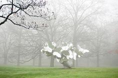 "The New York Botanical Garden, photo of Manolo Valdés' ""Butterflies"""