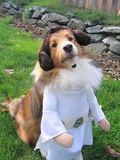 Help me, Obi Wan the Doggie...