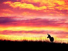 Google Image Result for http://images2.fanpop.com/image/photos/9600000/Sunset-Wallpapr-sunsets-and-sunrises-9613602-800-600.jpg