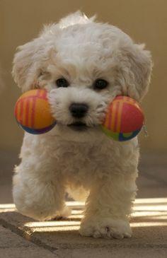 So cute! I want him!