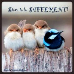 Dare to be DIFFERENT! beauti anim, anim quot