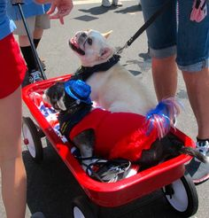 PAC Volunteers Coogee and Tovah ride along at the 4th of July parade in Pacific Palisades