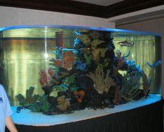 Aquariums public private on pinterest aquarium fish for Atm fish tank