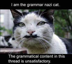 LOLcat: Grammar Nazi Cat