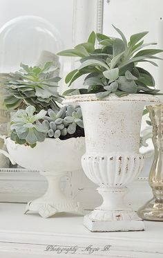 Silvery succulents + white iron.