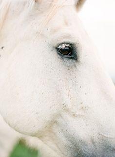 white hors, eye