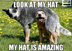Dog finds a new hat.