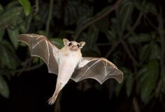 25 of the cutest bat species Bats are crucial to diverse ecosystems across the globe, yet they are often vilified or feared. Let's take a mo...