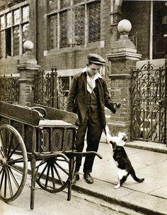 histori, catsmeat man, meow, london, cat food