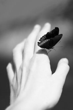 Beauty in Black & White | #butterfly #creatures hand, butterfli, blackwhit, beautiful moments, black white, inspir, thing, photographi