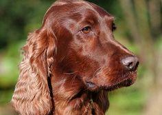 Bader's dog, Buster: