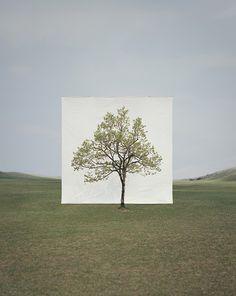 Myoung Ho Lee Tree Series