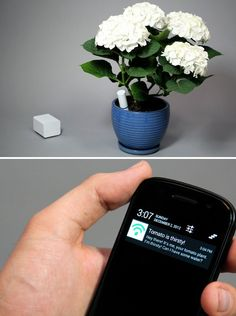 This little gadget tells you when your plant needs to be watered, fed, and taken care of.