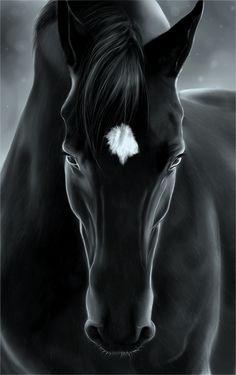 anim, black beauti, star, white, horse paintings