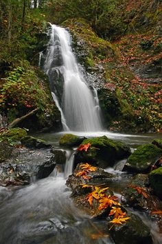 pacific northwest waterfall leaves
