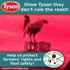 TAKE ACTION: Stop the Filthy Chicken Rule  the Tyson Foods Anti-Farmer Act!