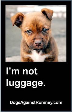 Dogs aren't luggage.