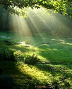 sun rays through the woods