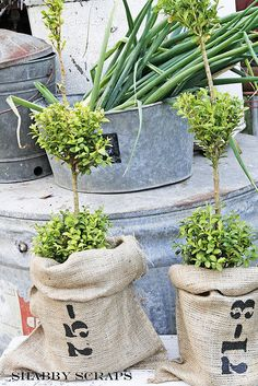 burlap sacks over inexpensive plastic - good idea