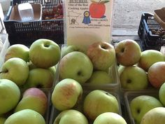First apples 8/17/13. Dutchess Apples from Appleberry Farm, good cooking apple