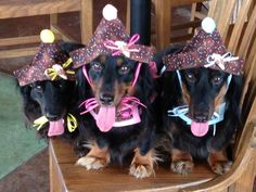 party hounds