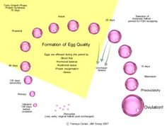 Increase Your Egg Health