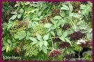 diy herbal remedies