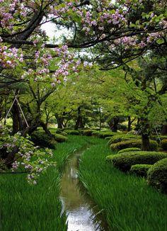 Cherry Blossom Park, Sakura, Japan photo via cyto