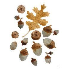 acorn and oak leaf study