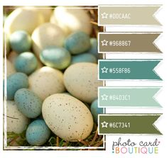Robin Egg Blue and Brown