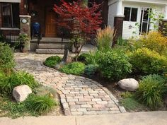 walkway, plants