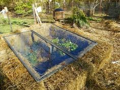 strawbale cold frame.
