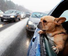 Dogs & car windows.