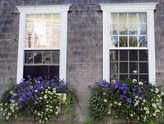 waves of delicate snow-white sutera, trailing white petunias, calibrachoa 'Million Bells Trailing Blue', flossy-topped periwinkle-blue ageratum, lavender-flowered verbena, and variegated vinca vine are effervescent partners for classic white and pink geraniums.  Window-Box Basics  By: Marjorie Gage, This Old House online