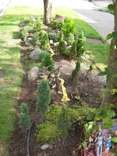 Miniature Conifer Garden