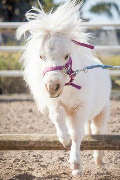 pony love...