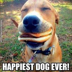 Happiest dog ever..