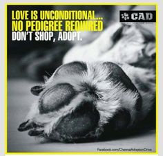 Love Is Unconditional .... No Pedigree Required. Don't Shop. Adopt.