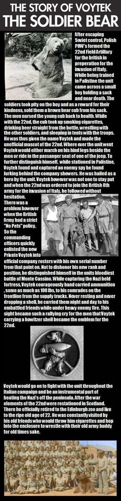 The story of the soldier bear