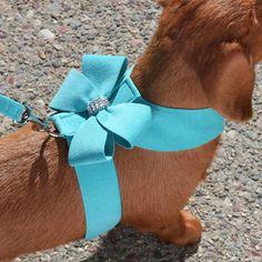 Bow Dog Harness