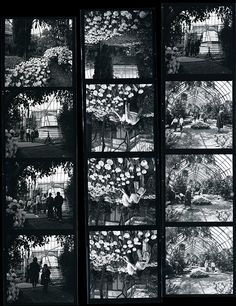 A contact sheet from a Dutch-themed exhibition of tulips in the Conservatory, April 1966 curtesy of the New York Botanical Garden