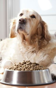 7 Ways to Care for Your #Dog Naturally