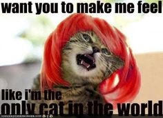 Why are cats still funny to me?!