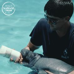 Need a reason to smile? Look! An adorable manatee calf being bottle fed by a caring SeaWorld Rescue Team member. #TBT #365DaysOfRescue